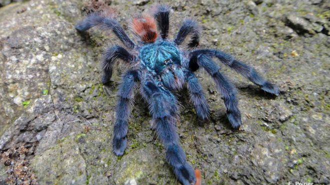 Que signifie un rêve d'araignée bleue ?