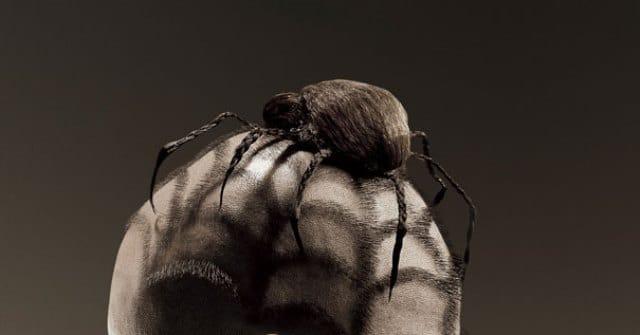 Que signifie un rêve d'araignée dans les cheveux ?