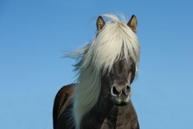Que signifie un rêve de cheval ?