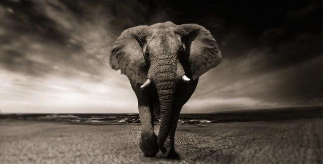Que signifie un rêve de manger un éléphant ?