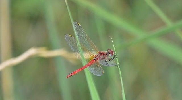 Que signifie rêver d'insectes ?