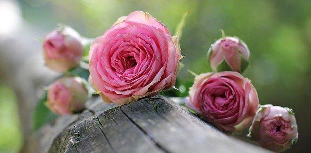 Que signifie rêver de rose ?
