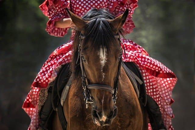 Que signifie rêver d'équitation ?