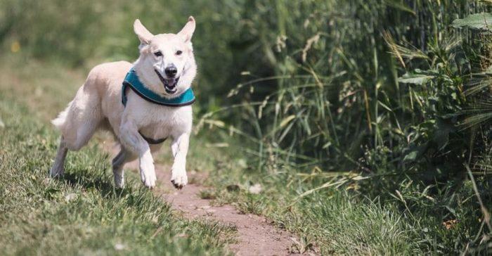 Que signifie rêver d'être poursuivi par un chien ?