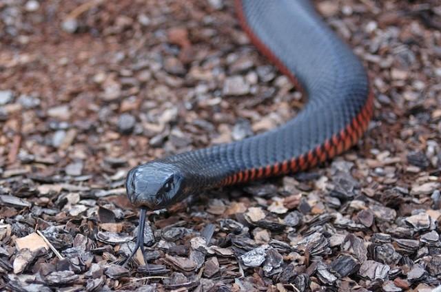 Pourquoi rêver d'être poursuivi par un serpent ?