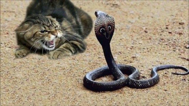 Que signifie rêver de chat mordu par un serpent ?