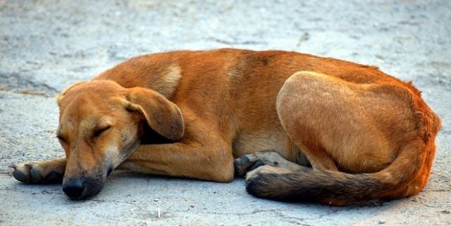 Que signifie rêver de chien abandonné ?