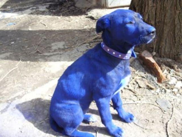 Que signifie rêver de chien bleu ?