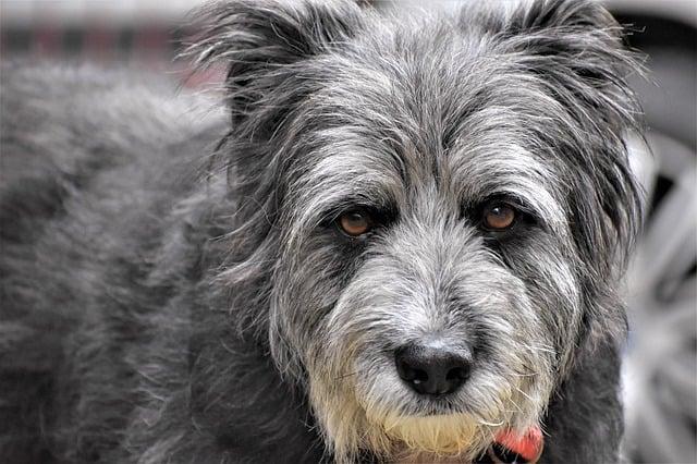 Que signifie rêver de chien gris ?