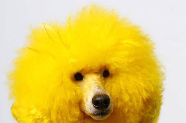 Que signifie rêver de chien jaune ?