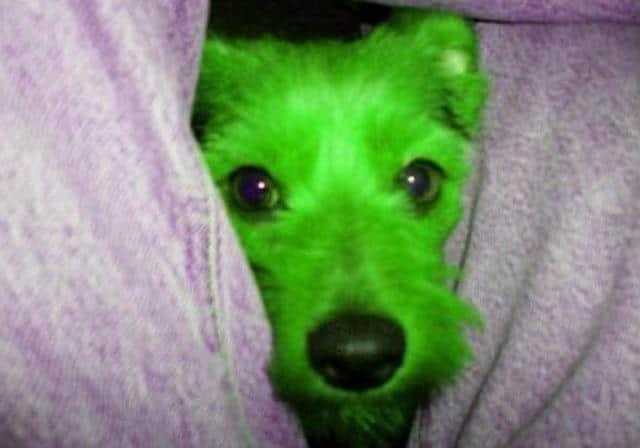 Que signifie rêver de chien vert ?