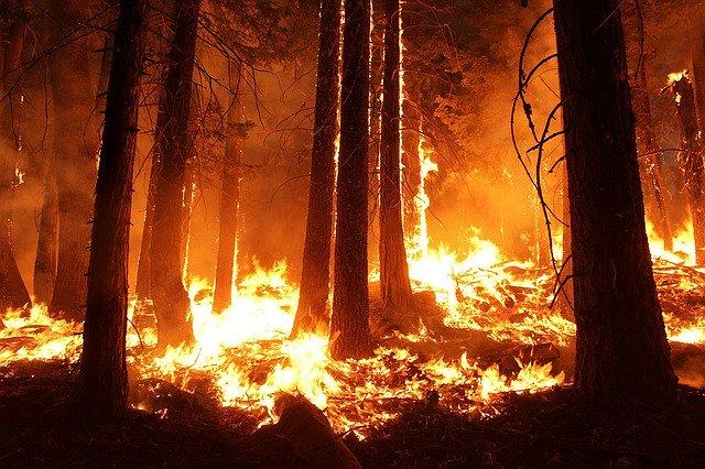 Pourquoi rêver de feu de forêt ?
