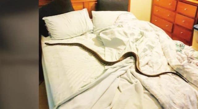 Pourquoi rêver de serpent dans la chambre ?