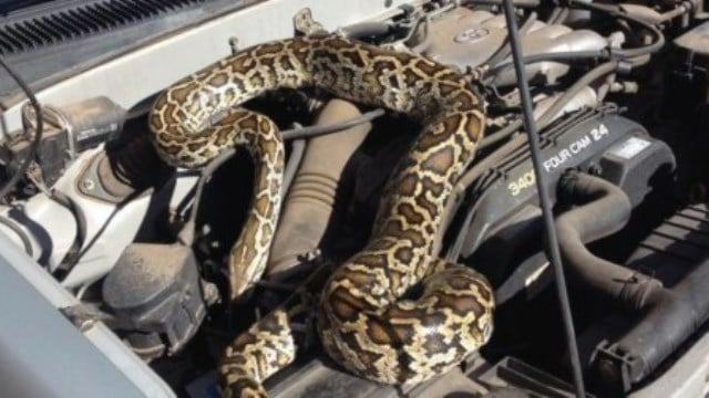 Que signifie rêver de serpent dans la voiture ?