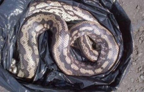 Pourquoi rêver de serpent dans un sac ?