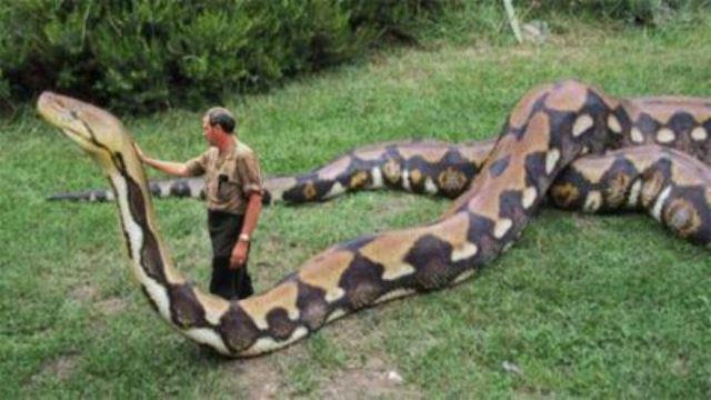 Que signifie rêver d'un serpent géant ?