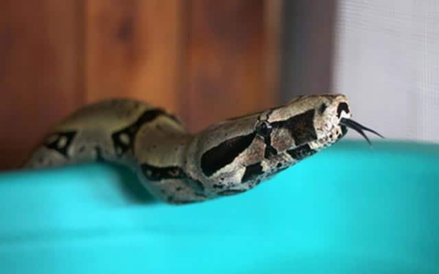 Que signifie rêver de serpent qui mord un enfant ?