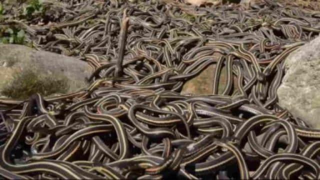 Que signifie rêver de serpents partout ?