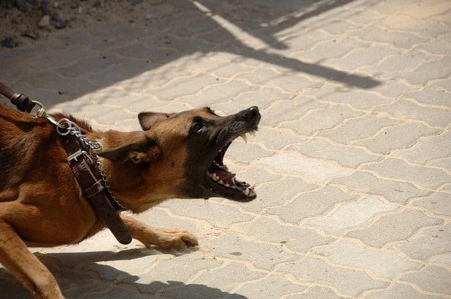Que signifie rêver d'avoir peur d'un chien ?