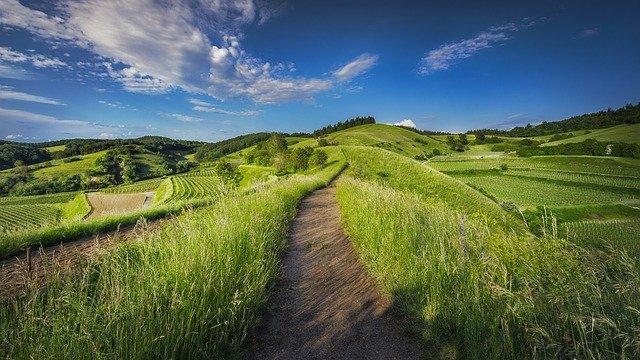 Que signifie rêver d'herbe ?