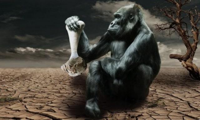 Que signifie rêver de gorille ?