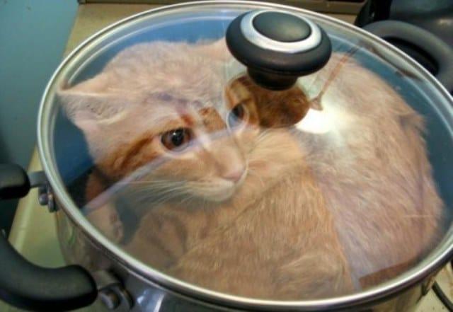 Que signifie rêver de manger un chat ?