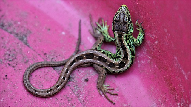Que signifie rêver de salamandre ?
