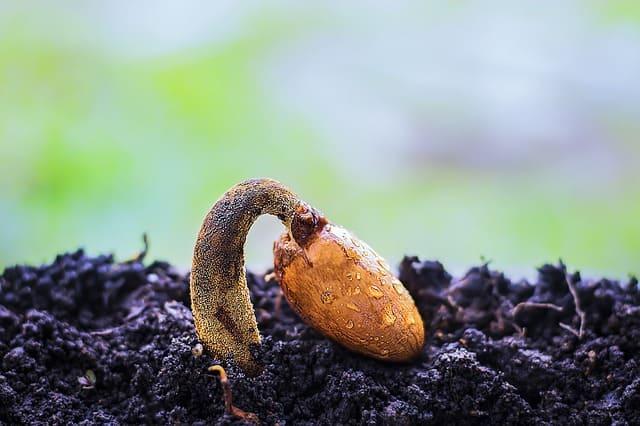 Que signifie rêver de semence ?