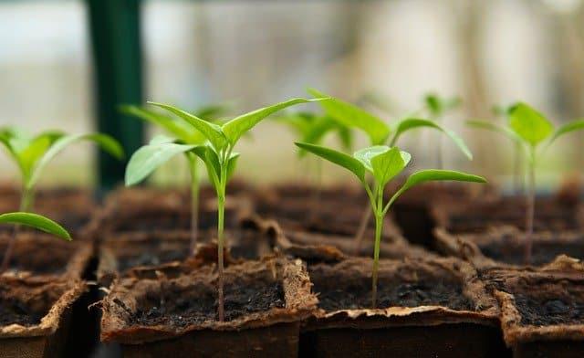 Que signifie rêver de semer ?