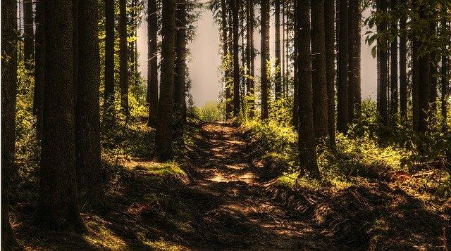 Que signifie rêver de sentier ?