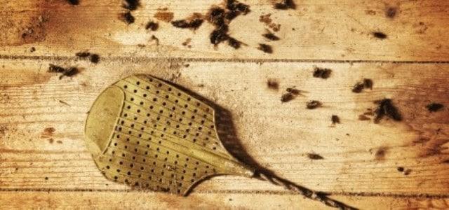 Que signifie rêver de tuer des mouches ?