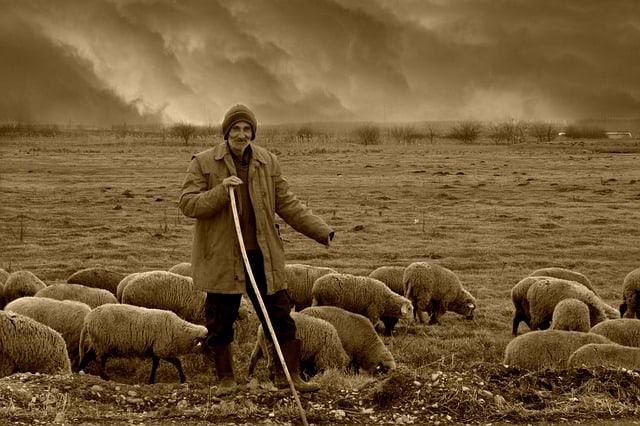 Que signifie rêver de tuer un mouton ?