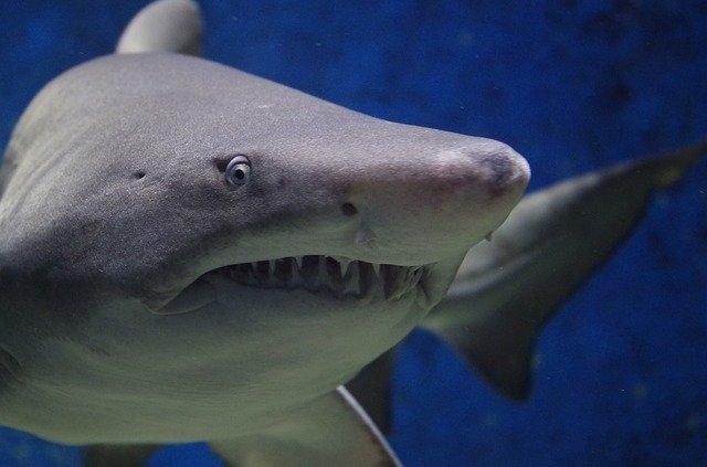 Que signifie rêver de tuer un requin ?