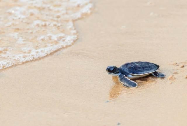 Que signifie rêver de sauver une tortue ?