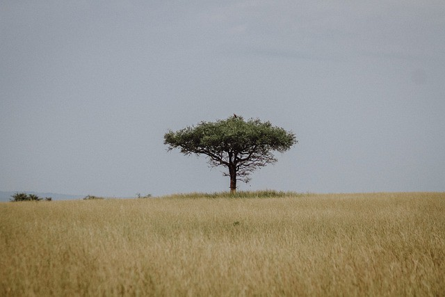 Que signifie rêver de steppe ?