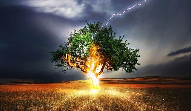 Que signifie rêver d'arbre en feu ?