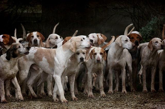 Que signifie rêver de chien de chasse ?