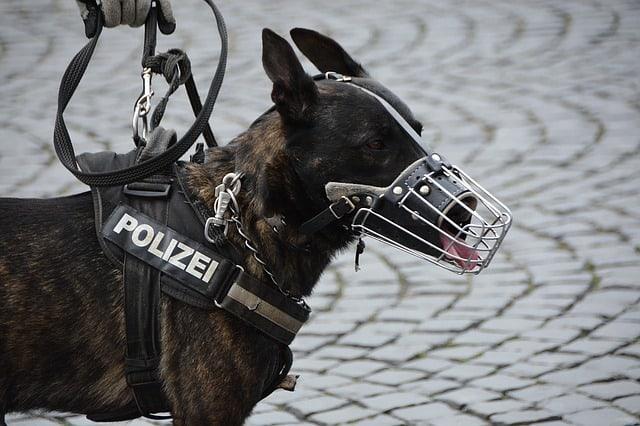 Que signifie rêver de chien policier ?