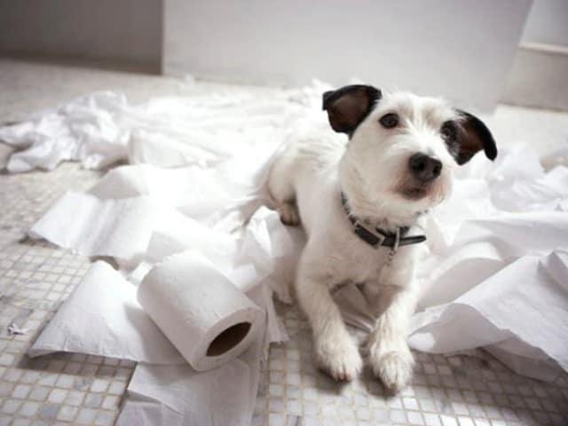Que signifie rêver de manger du papier ?