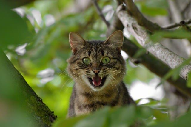 Pourquoi rêver d'avoir peur d'un chat ?