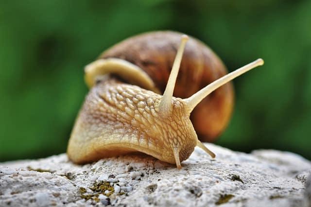 Pourquoi rêver d'escargot ?