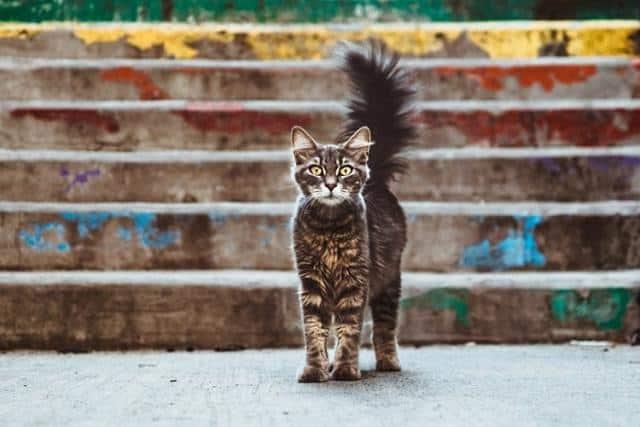 Pourquoi rêver d'être poursuivi par un chat ?