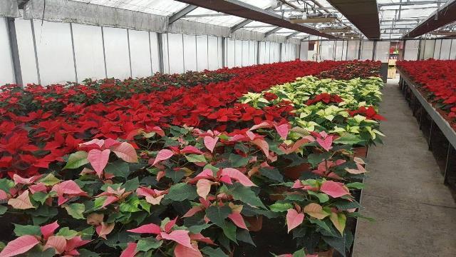 Pourquoi rêver de horticulteur ?
