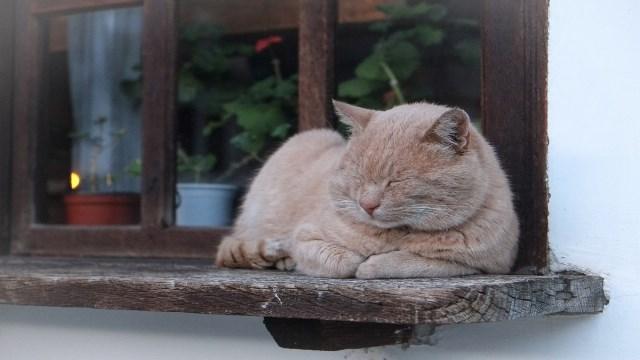 Pourquoi rêver de chat beige ?