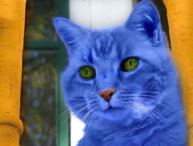 Pourquoi rêver de chat bleu ?