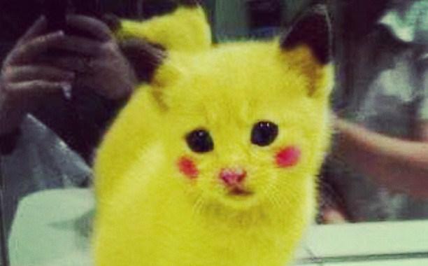 Pourquoi rêver de chat jaune ?