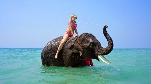 Pourquoi rêver de monter sur un éléphant ?