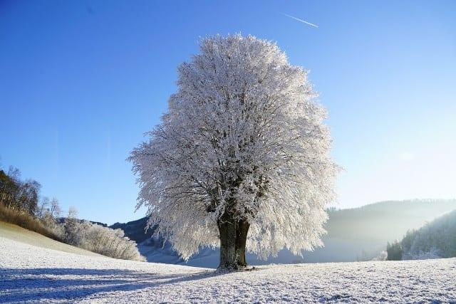 Pourquoi rêver d'hiver ?