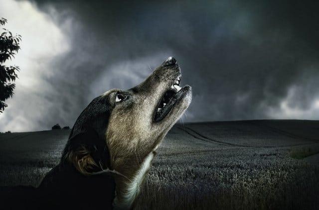 Pourquoi rêver de chien qui aboie ?