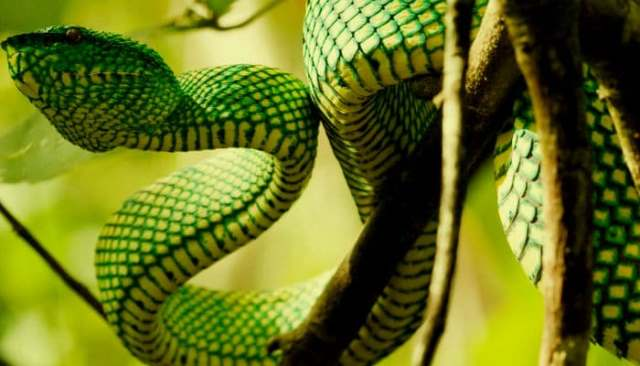 La symbolique du rêve de serpent: